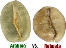 kopi luwak arabika robusta