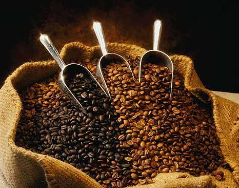 cara pengolahan kopi luwak