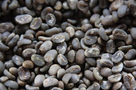 green bean kopi luwak