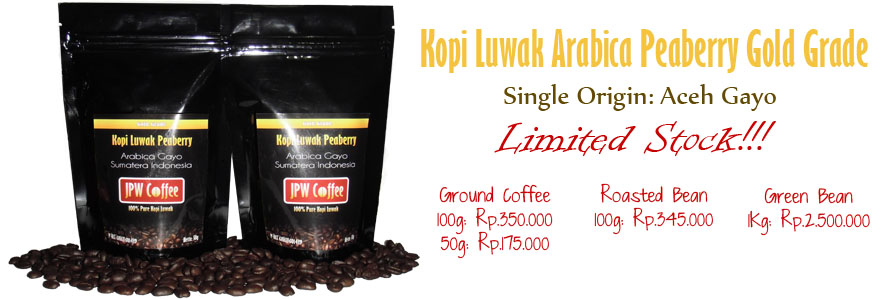 kopi luwak peaberry