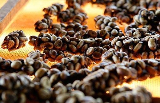 supplier kopi luwak