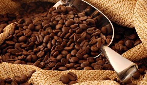 kopi luwak organik