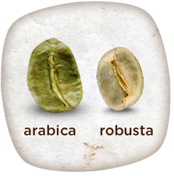 arabika robusta